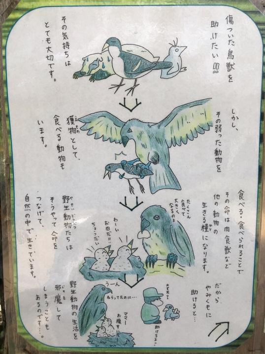 傷病鳥獣保護①.jpg