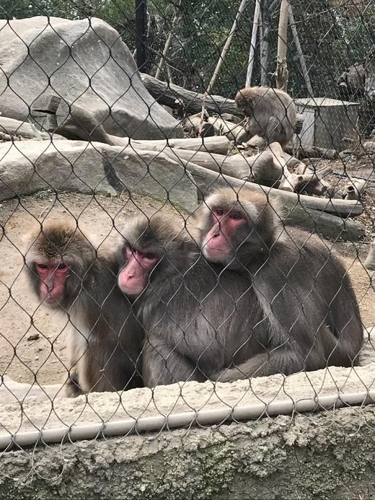 サル団子.jpg