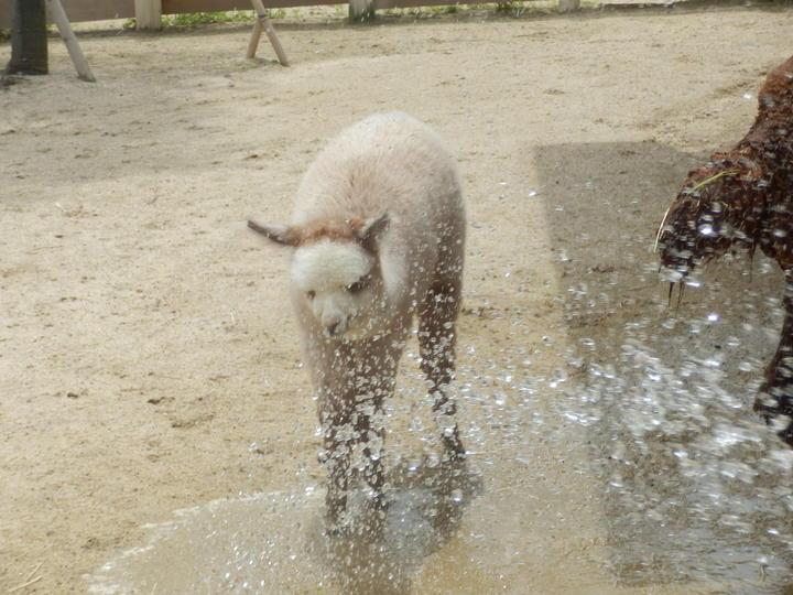 ソニア水浴び