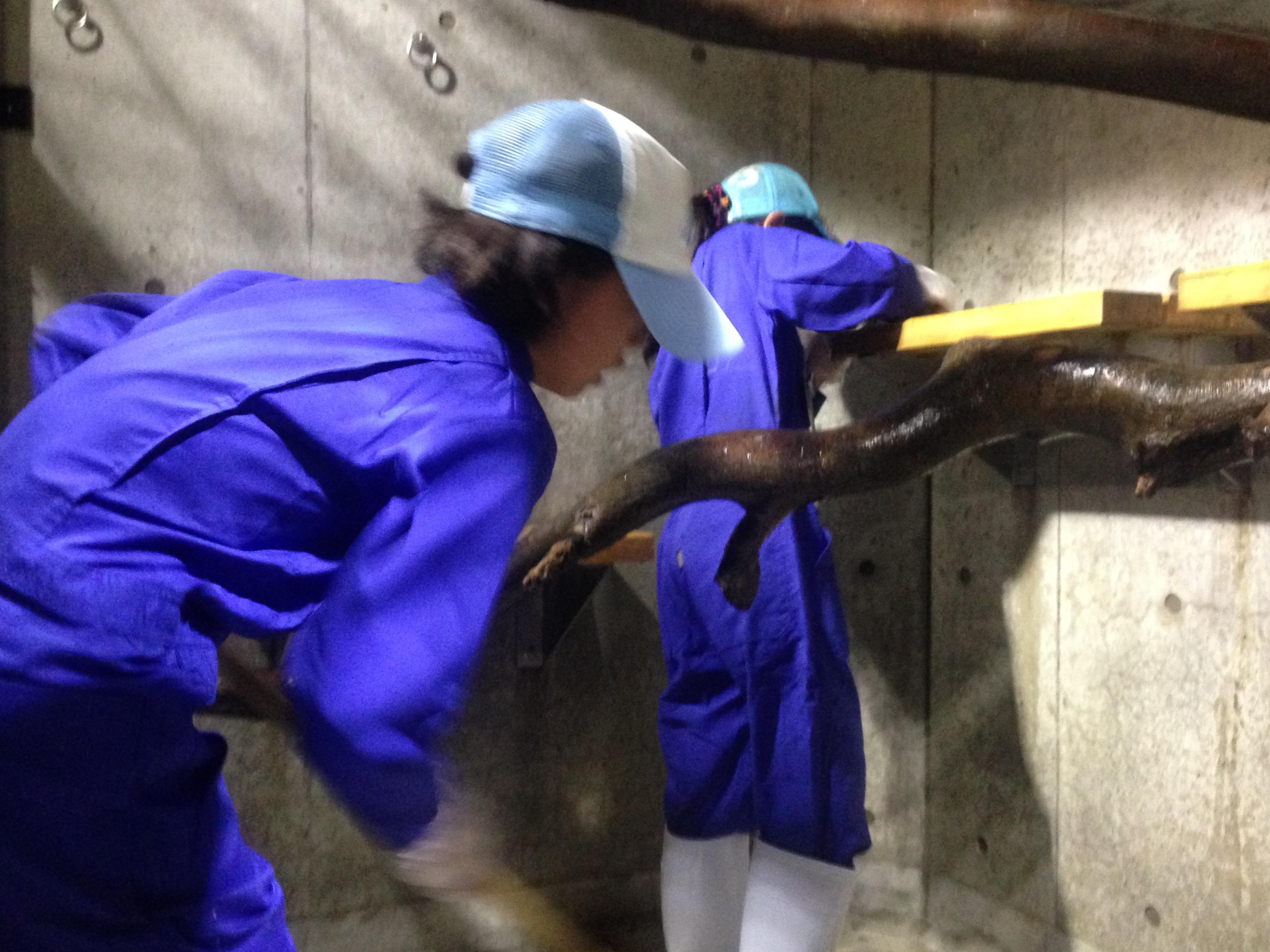 8月8日 なりきり飼育員 - 飼育員ブログ - ときわ動物園 - ときわ公園|山口県宇部市